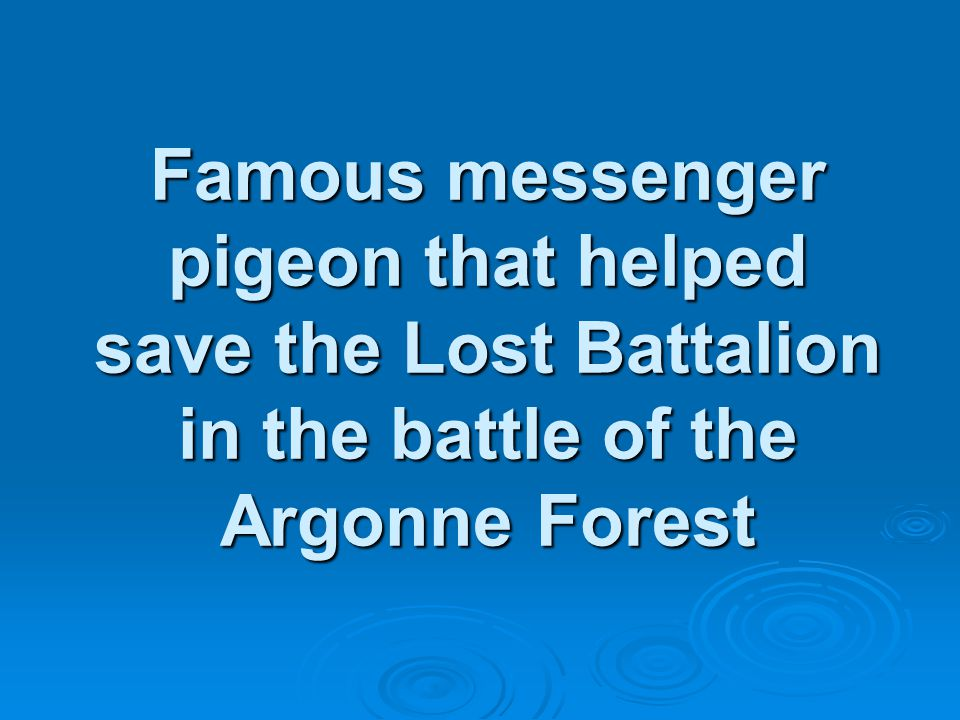 Famous messenger pigeon that helped save the Lost Battalion in the battle of the Argonne Forest