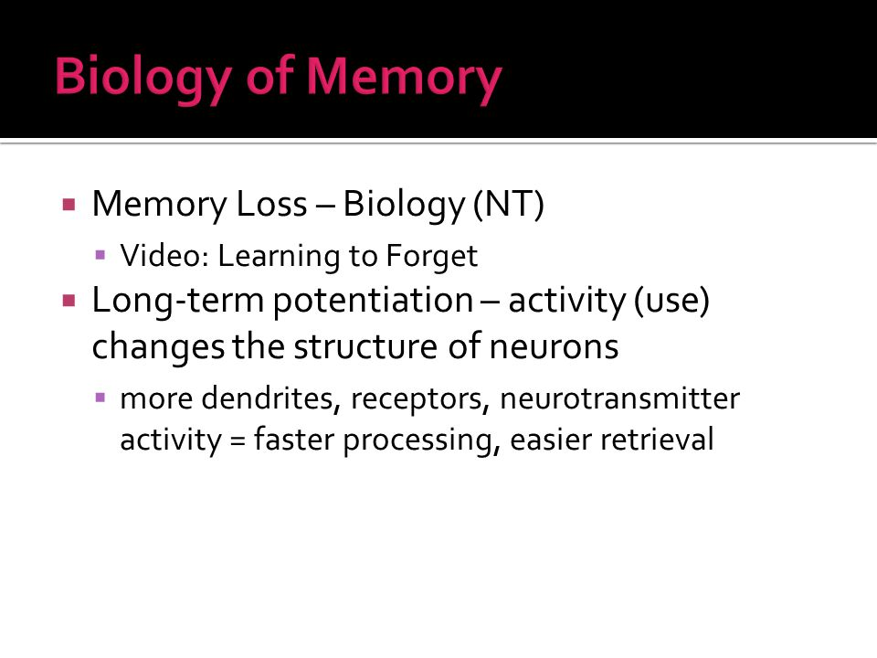  Memory Loss – Biology (NT)  Video: Learning to Forget  Long-term potentiation – activity (use) changes the structure of neurons  more dendrites, receptors, neurotransmitter activity = faster processing, easier retrieval