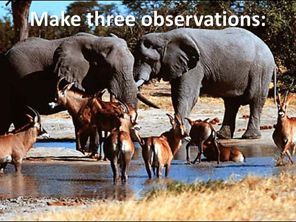 Make three observations: