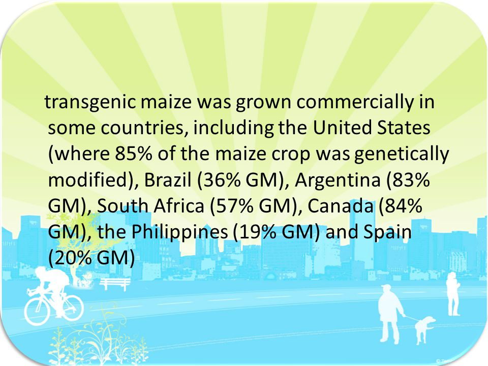 transgenic maize was grown commercially in some countries, including the United States (where 85% of the maize crop was genetically modified), Brazil (36% GM), Argentina (83% GM), South Africa (57% GM), Canada (84% GM), the Philippines (19% GM) and Spain (20% GM)