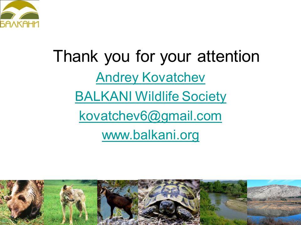 Thank you for your attention Andrey Kovatchev BALKANI Wildlife Society kovatchev6@gmail.com www.balkani.org