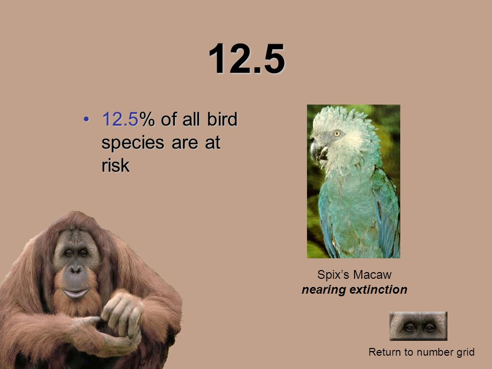 12.5 12.5% of all bird species are at risk12.5% of all bird species are at risk Return to number grid Spix's Macaw nearing extinction