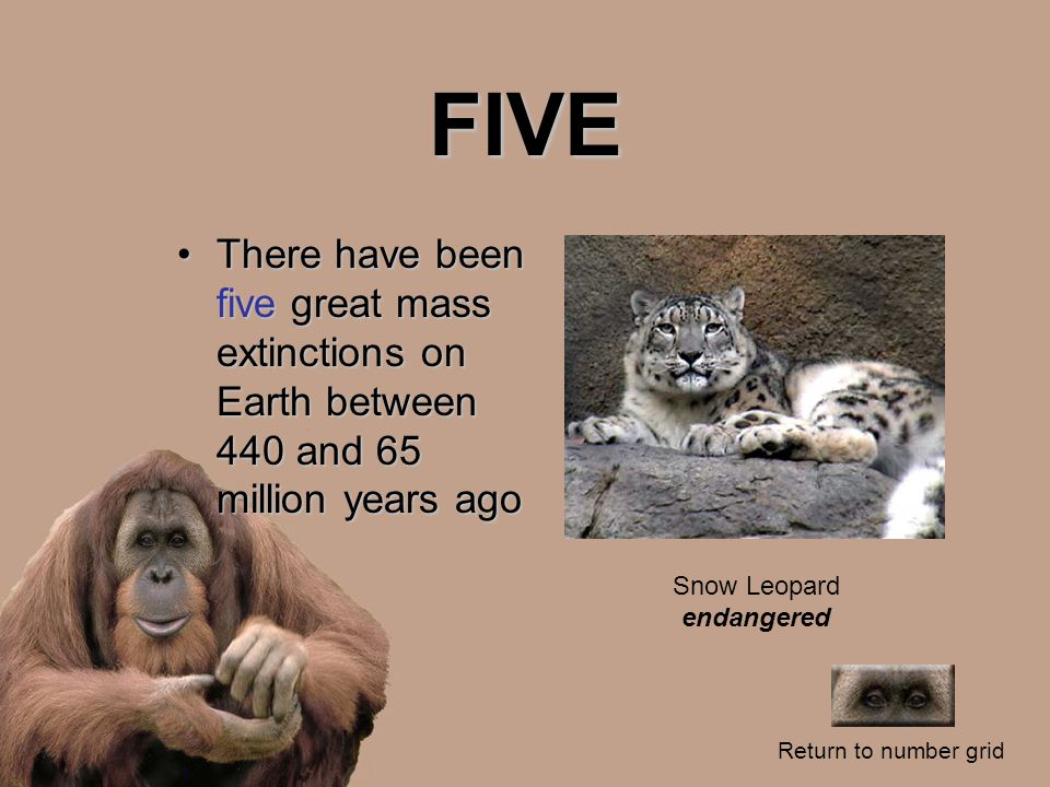 FIVE There have been five great mass extinctions on Earth between 440 and 65 million years agoThere have been five great mass extinctions on Earth between 440 and 65 million years ago Return to number grid Snow Leopard endangered