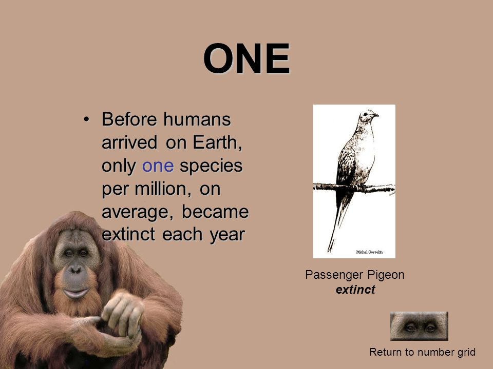 ONE Before humans arrived on Earth, only one species per million, on average, became extinct each yearBefore humans arrived on Earth, only one species per million, on average, became extinct each year Return to number grid Passenger Pigeon extinct