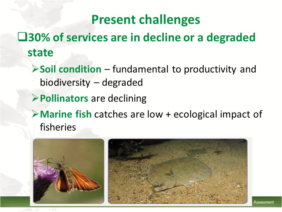 30% of services are in decline or a degraded state  Soil condition – fundamental to productivity and biodiversity – degraded  Pollinators are declining  Marine fish catches are low + ecological impact of fisheries Present challenges