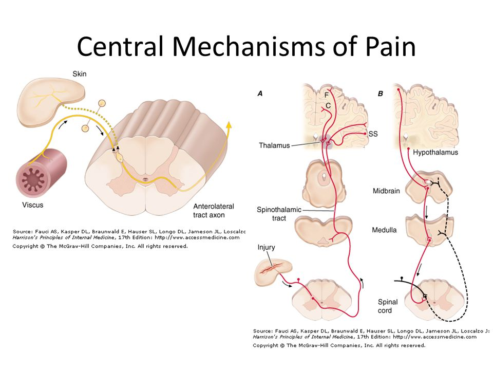 Central Mechanisms of Pain