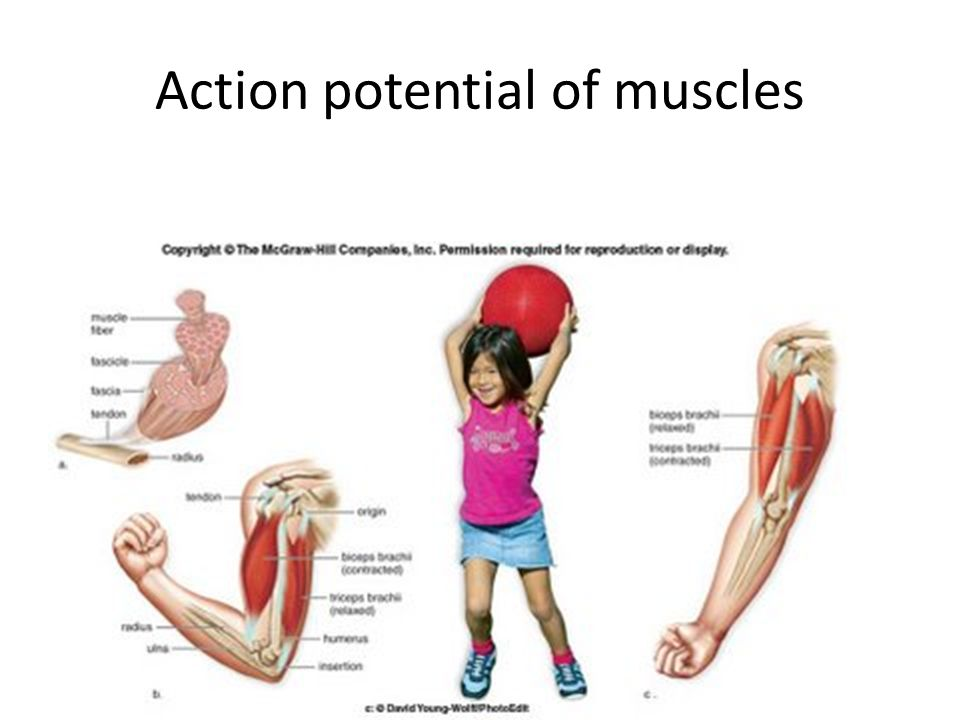 Action potential of muscles