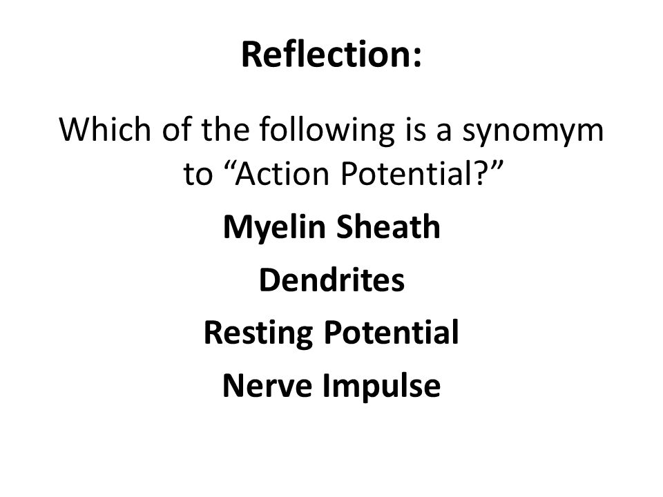 Reflection: Which of the following is a synomym to Action Potential Myelin Sheath Dendrites Resting Potential Nerve Impulse