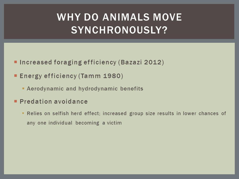  Increased foraging efficiency (Bazazi 2012)  Energy efficiency (Tamm 1980)  Aerodynamic and hydrodynamic benefits  Predation avoidance  Relies on selfish herd effect; increased group size results in lower chances of any one individual becoming a victim WHY DO ANIMALS MOVE SYNCHRONOUSLY