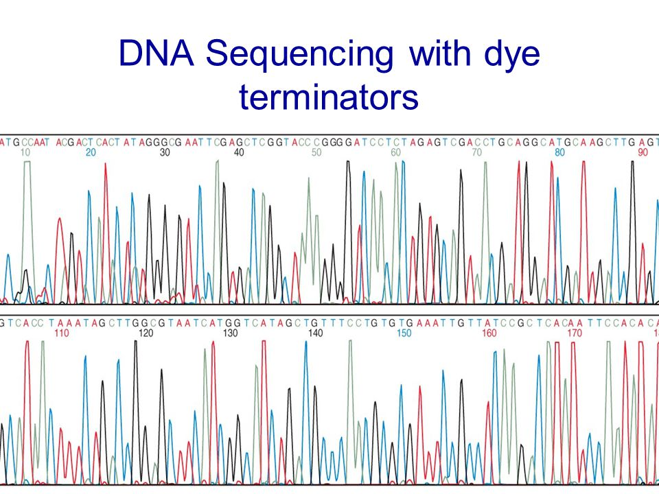 DNA Sequencing with dye terminators