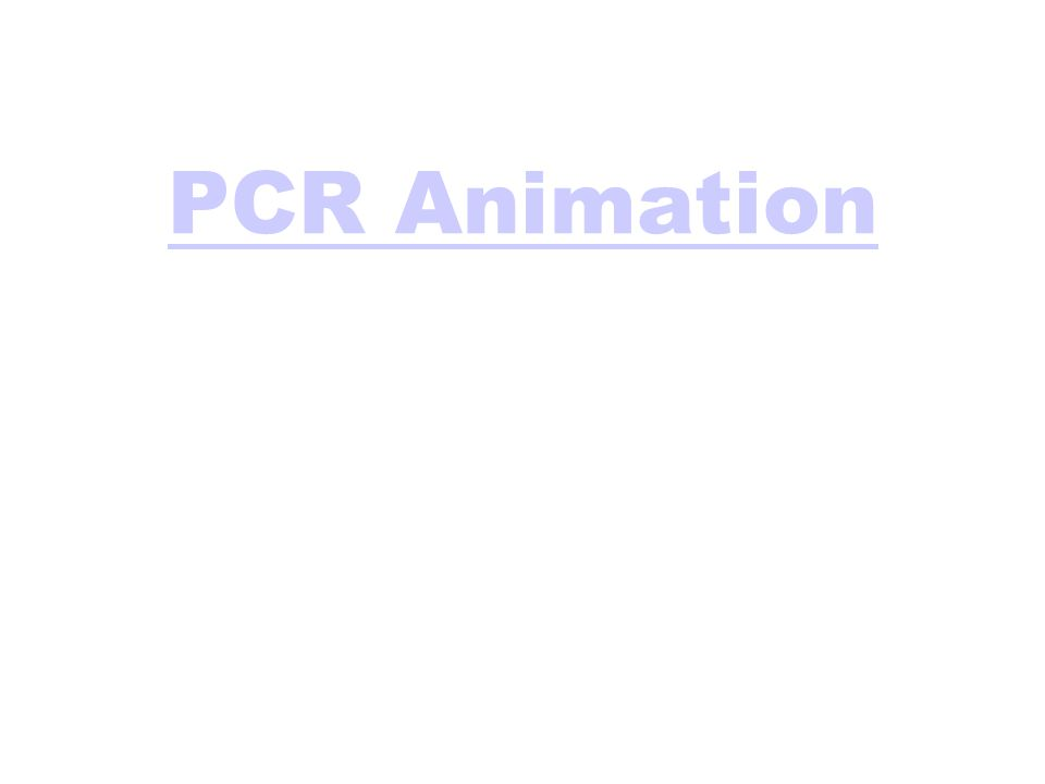 PCR Animation
