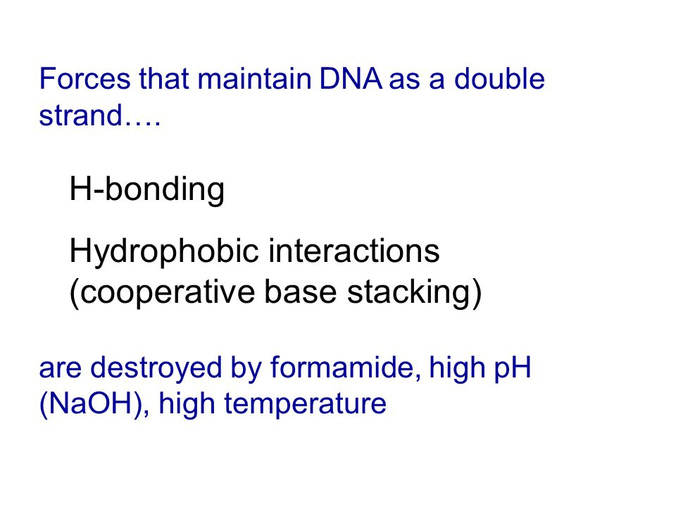 Forces that maintain DNA as a double strand….