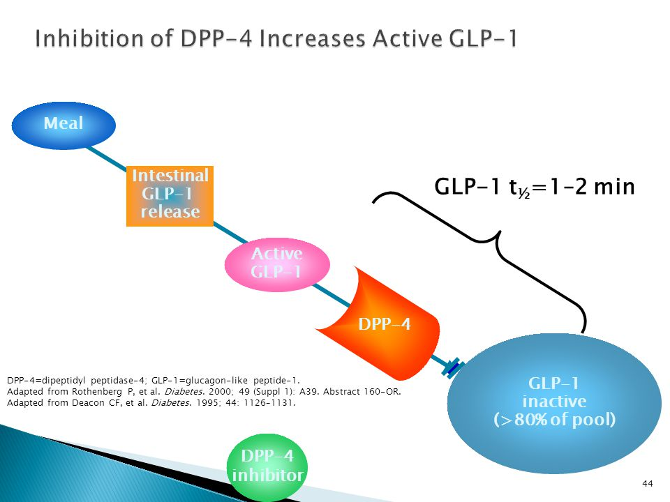 Inhibition of DPP-4 Increases Active GLP-1 GLP-1 inactive (>80% of pool) Active GLP-1 Meal DPP-4 Intestinal GLP-1 release GLP-1 t ½ =1–2 min DPP-4 inhibitor DPP-4=dipeptidyl peptidase-4; GLP-1=glucagon-like peptide-1.