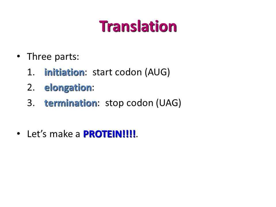 Translation Three parts: initiation 1.initiation: start codon (AUG) elongation 2.elongation: termination 3.termination: stop codon (UAG) PROTEIN!!!.