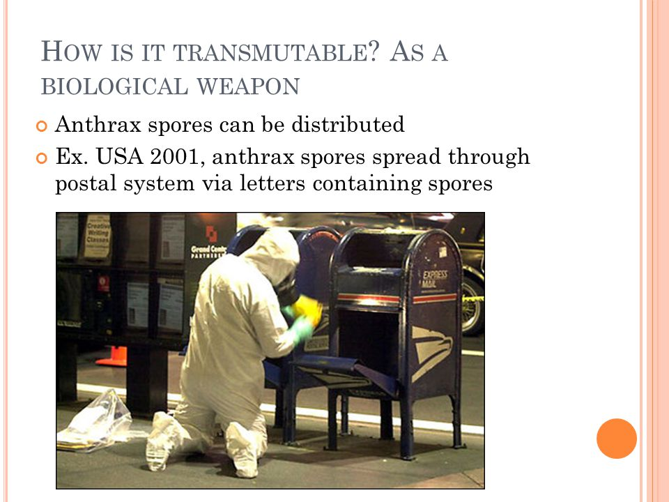 H OW IS IT TRANSMUTABLE . A S A BIOLOGICAL WEAPON Anthrax spores can be distributed Ex.