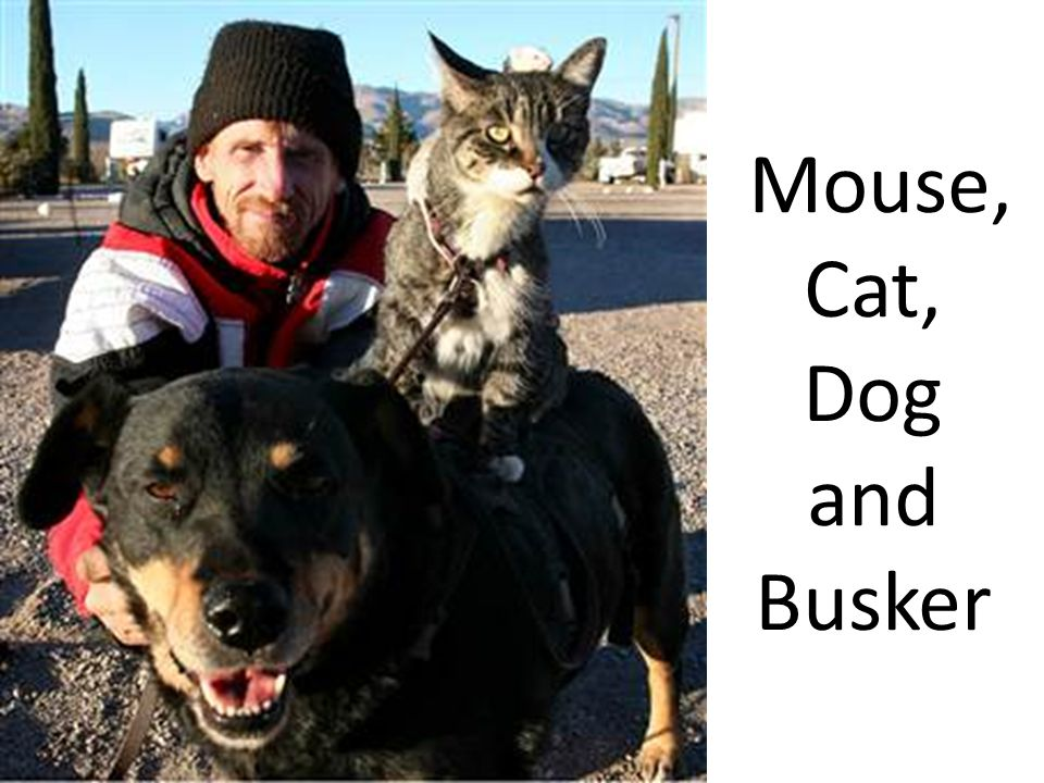 Mouse, Cat, Dog and Busker