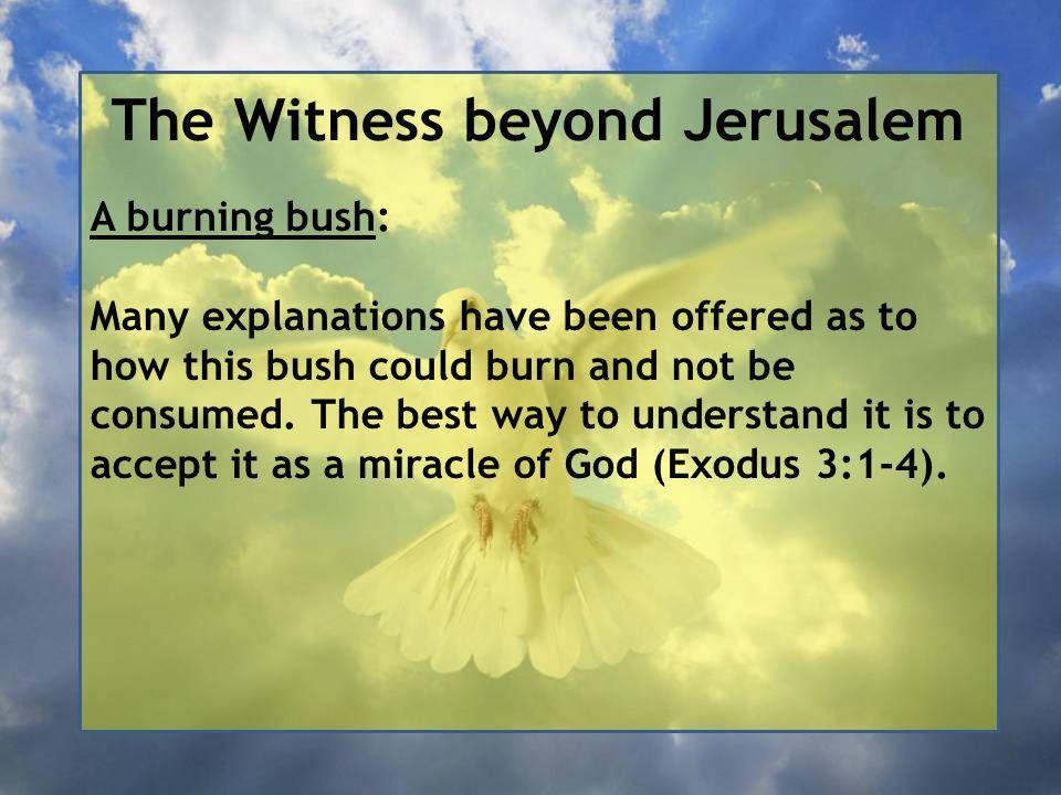 The Witness beyond Jerusalem A burning bush: Many explanations have been offered as to how this bush could burn and not be consumed.