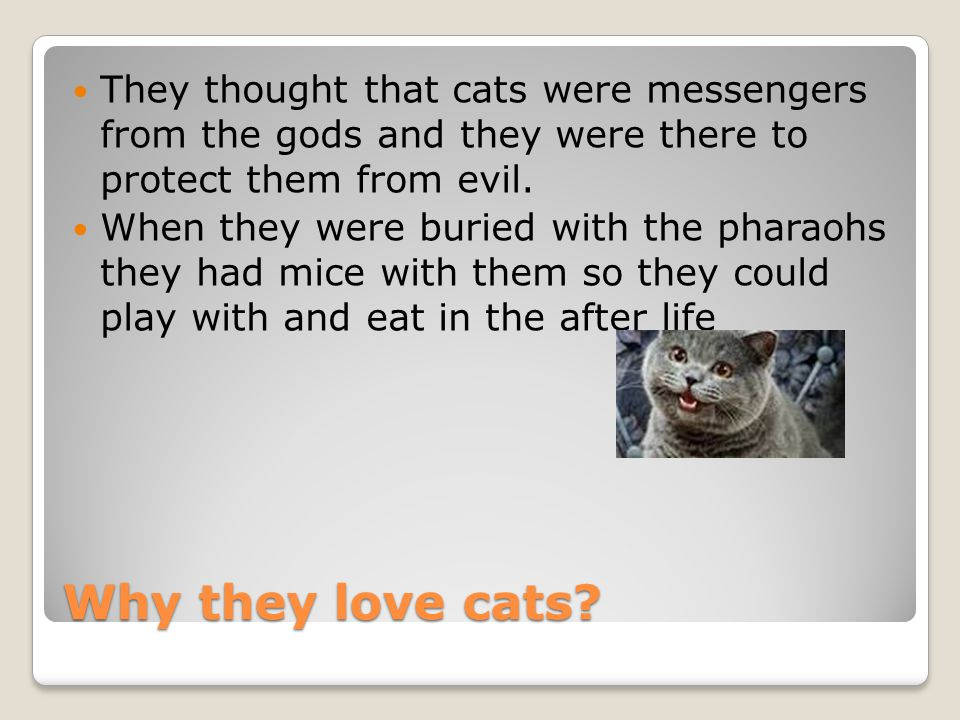 Why they love cats.