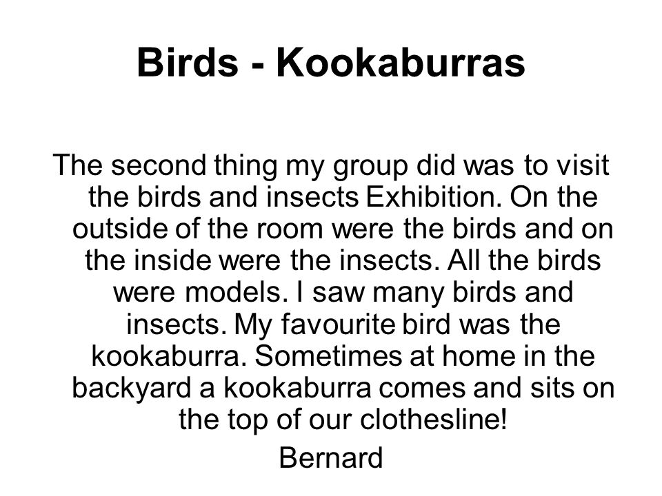 Birds - Kookaburras The second thing my group did was to visit the birds and insects Exhibition.