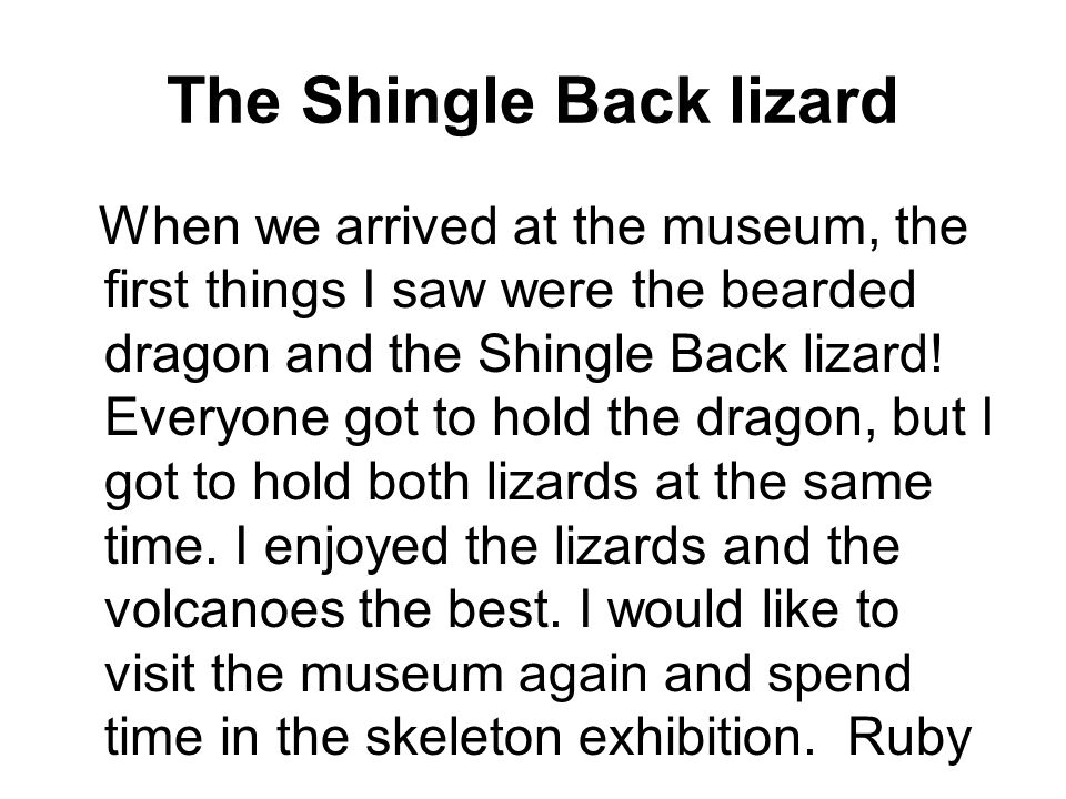 The Shingle Back lizard When we arrived at the museum, the first things I saw were the bearded dragon and the Shingle Back lizard.