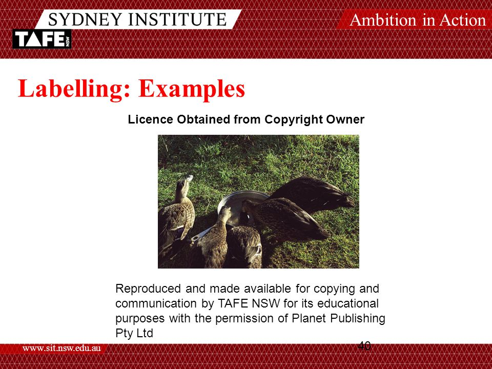 Ambition in Action www.sit.nsw.edu.au 40 Labelling: Examples Licence Obtained from Copyright Owner Reproduced and made available for copying and communication by TAFE NSW for its educational purposes with the permission of Planet Publishing Pty Ltd