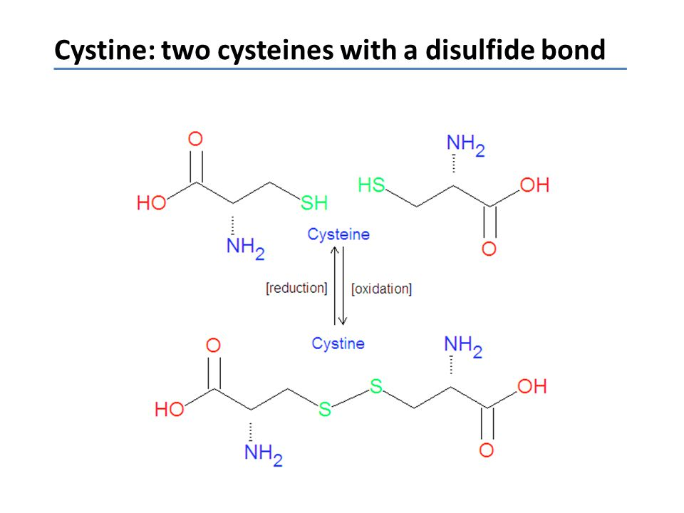 Cystine: two cysteines with a disulfide bond