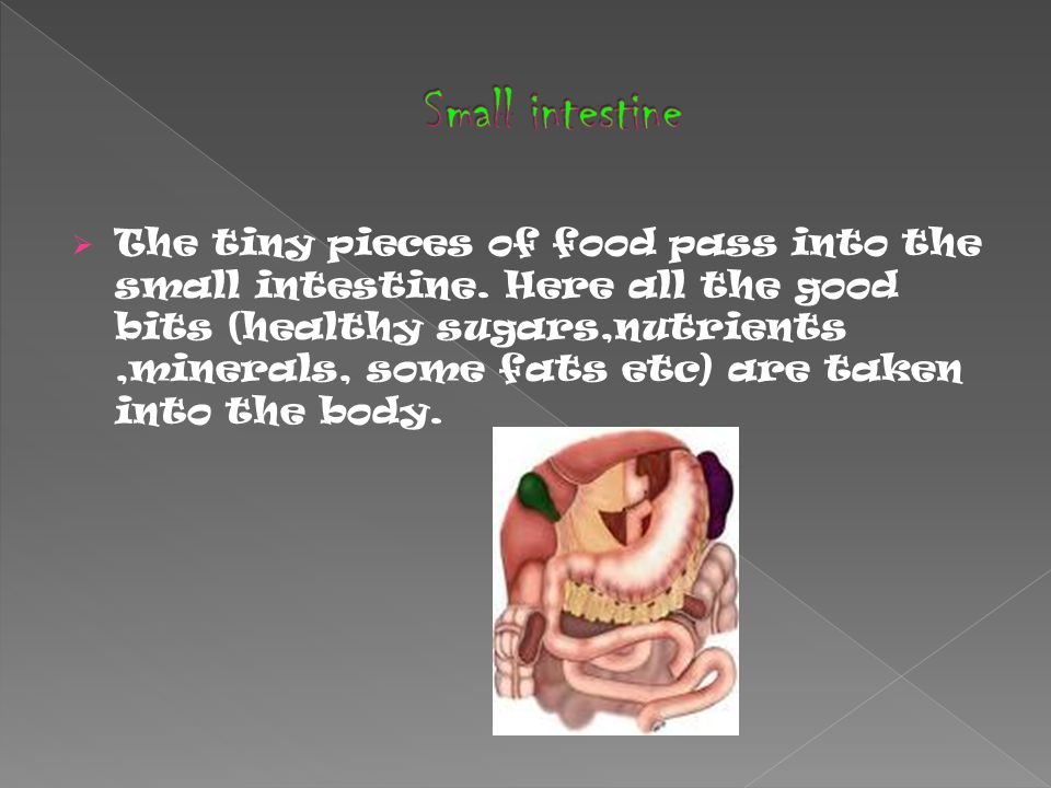  The tiny pieces of food pass into the small intestine.
