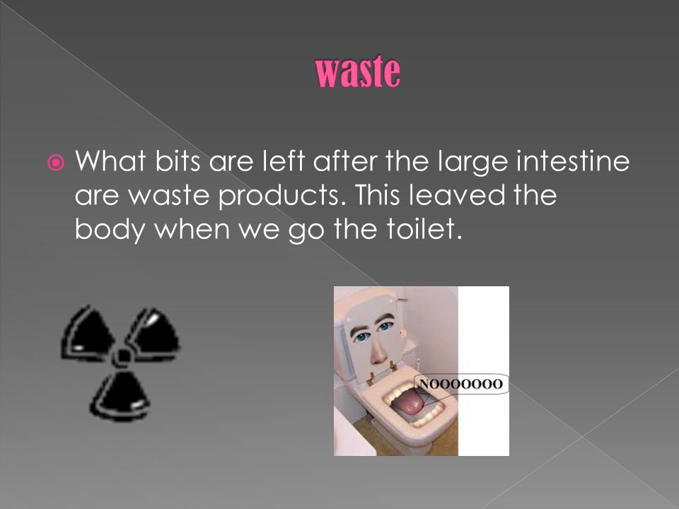  What bits are left after the large intestine are waste products.