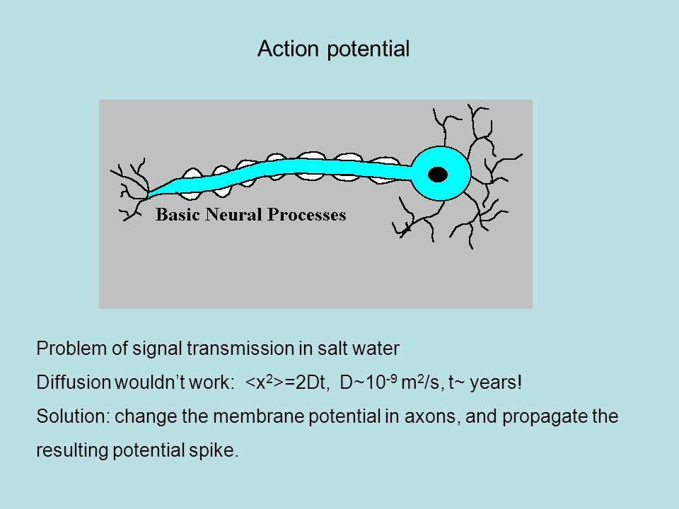 Action potential Problem of signal transmission in salt water Diffusion wouldn't work: =2Dt, D~10 -9 m 2 /s, t~ years.