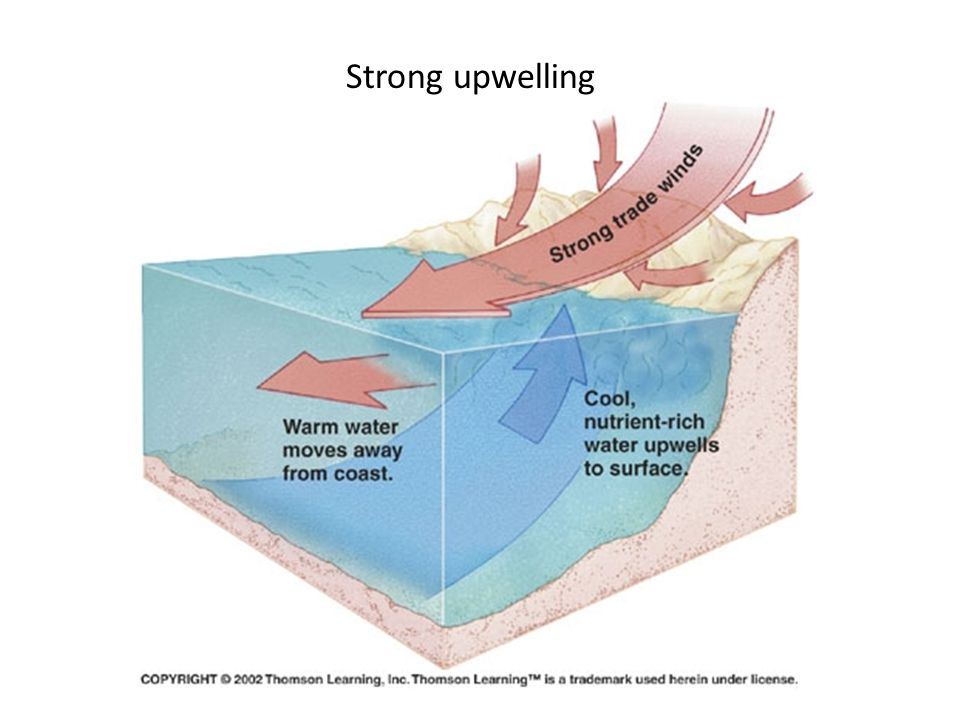 Strong upwelling