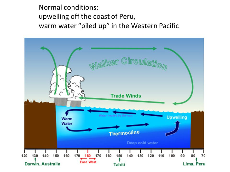 Normal conditions: upwelling off the coast of Peru, warm water piled up in the Western Pacific