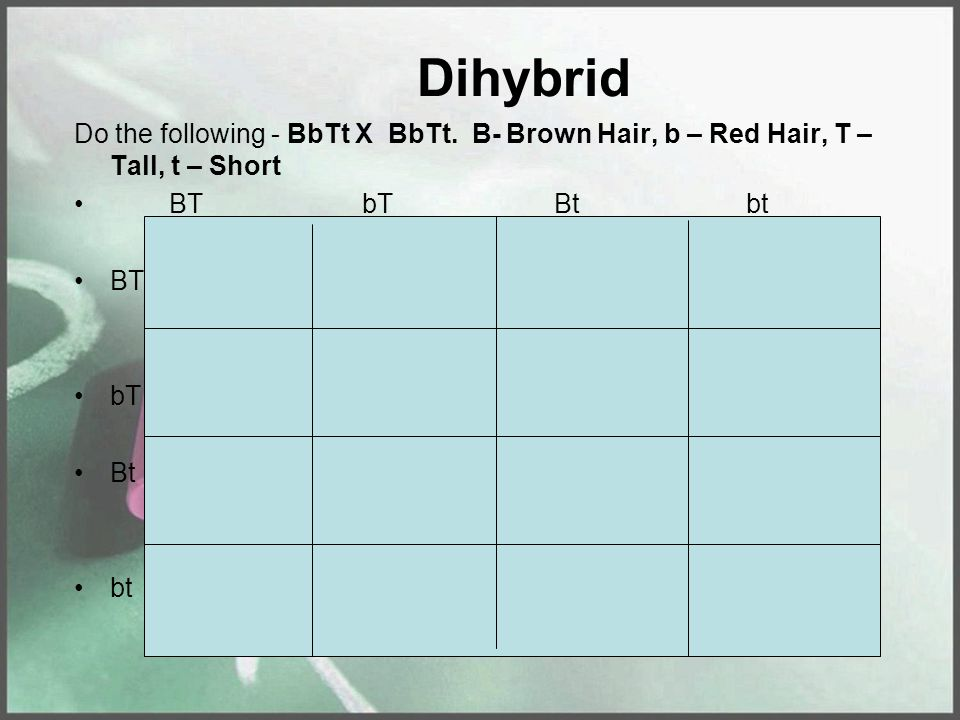 Dihybrid Do the following - BbTt X BbTt.