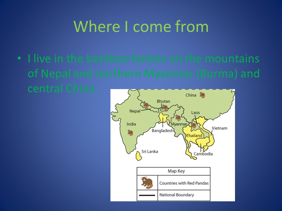 Where I come from I live in the bamboo forests on the mountains of Nepal and northern Myanmar (Burma) and central China.