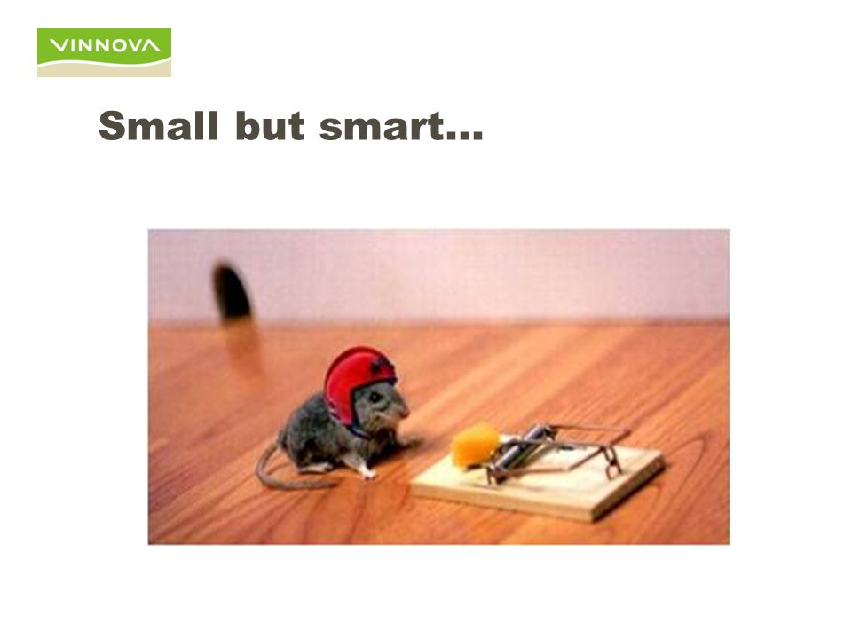 Small but smart…