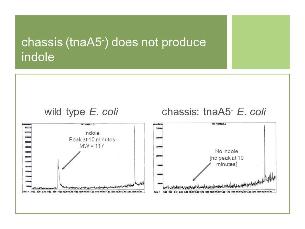 chassis (tnaA5 - ) does not produce indole No indole [no peak at 10 minutes] Indole Peak at 10 minutes MW = 117 wild type E.