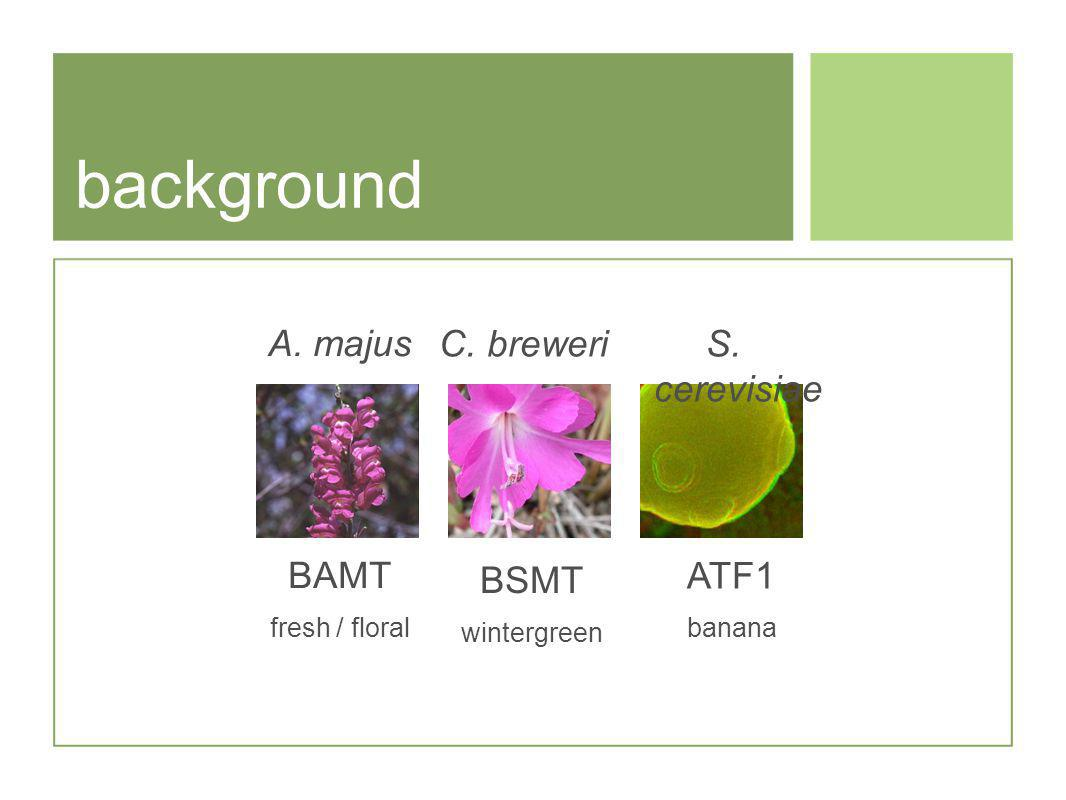 background A. majus BAMT fresh / floral BSMT wintergreen C. breweriS. cerevisiae ATF1 banana