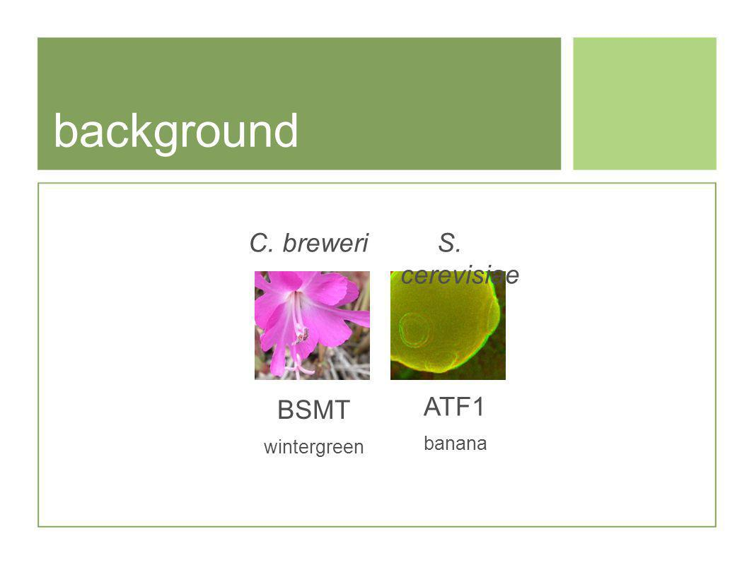 background BSMT wintergreen C. breweriS. cerevisiae ATF1 banana