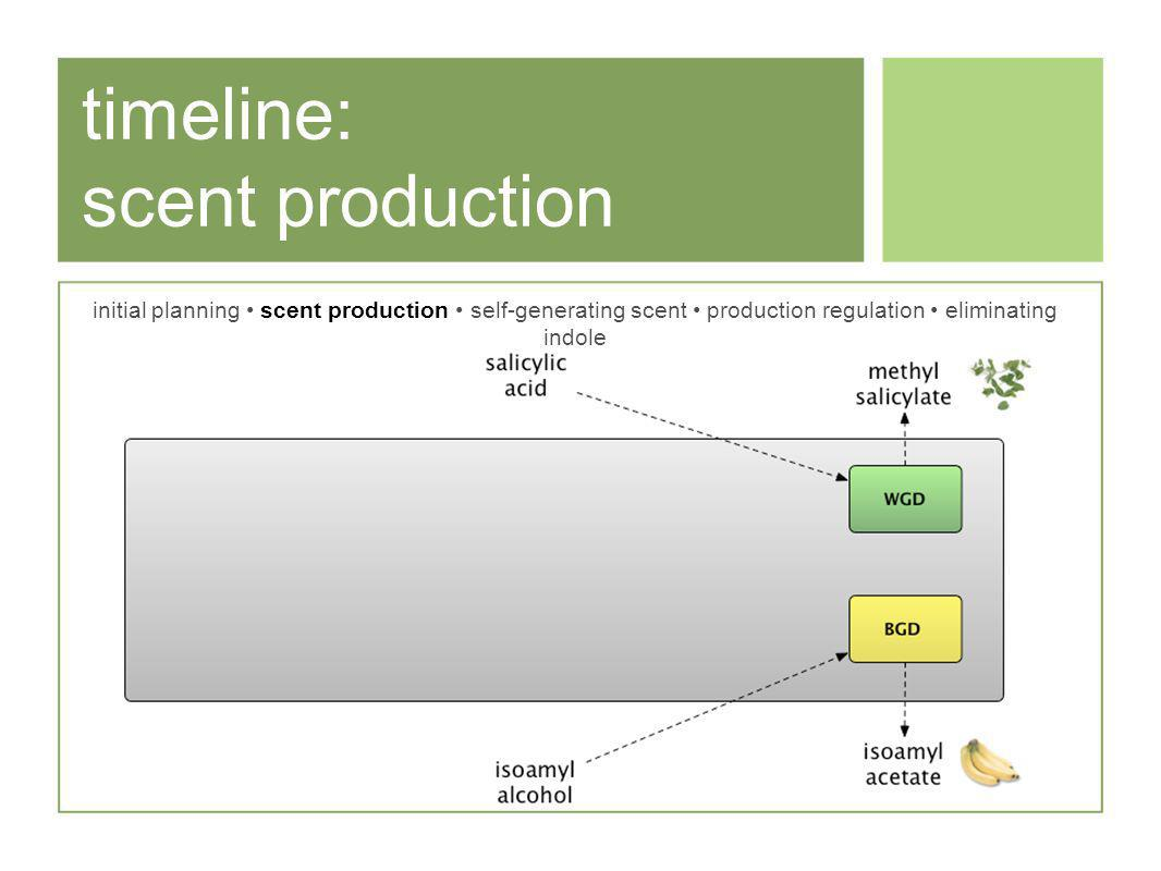 timeline: scent production initial planning scent production self-generating scent production regulation eliminating indole