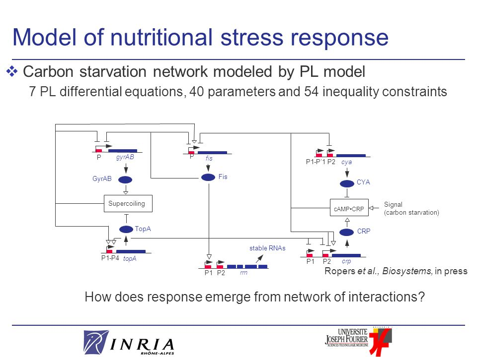Model of nutritional stress response vCarbon starvation network modeled by PL model 7 PL differential equations, 40 parameters and 54 inequality constraints Ropers et al., Biosystems, in press How does response emerge from network of interactions