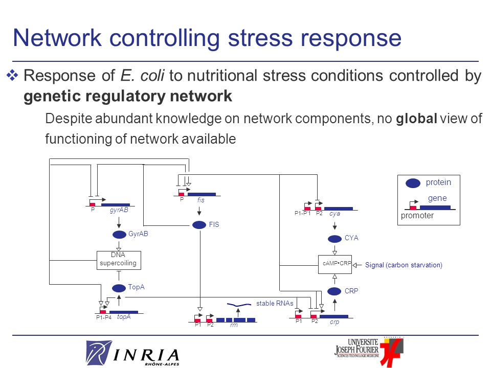 Network controlling stress response vResponse of E.