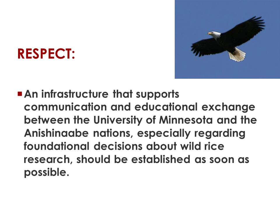RESPECT:  An infrastructure that supports communication and educational exchange between the University of Minnesota and the Anishinaabe nations, especially regarding foundational decisions about wild rice research, should be established as soon as possible.
