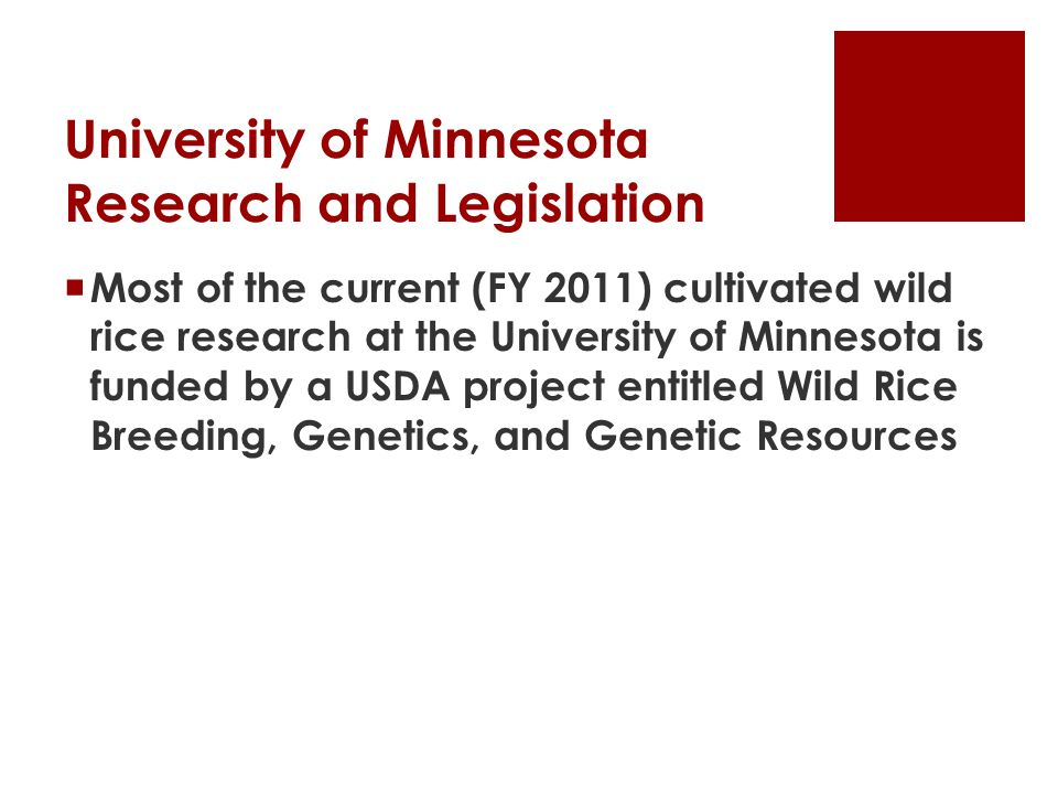 University of Minnesota Research and Legislation  Most of the current (FY 2011) cultivated wild rice research at the University of Minnesota is funded by a USDA project entitled Wild Rice Breeding, Genetics, and Genetic Resources