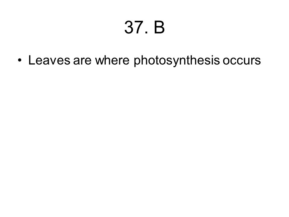 37. B Leaves are where photosynthesis occurs