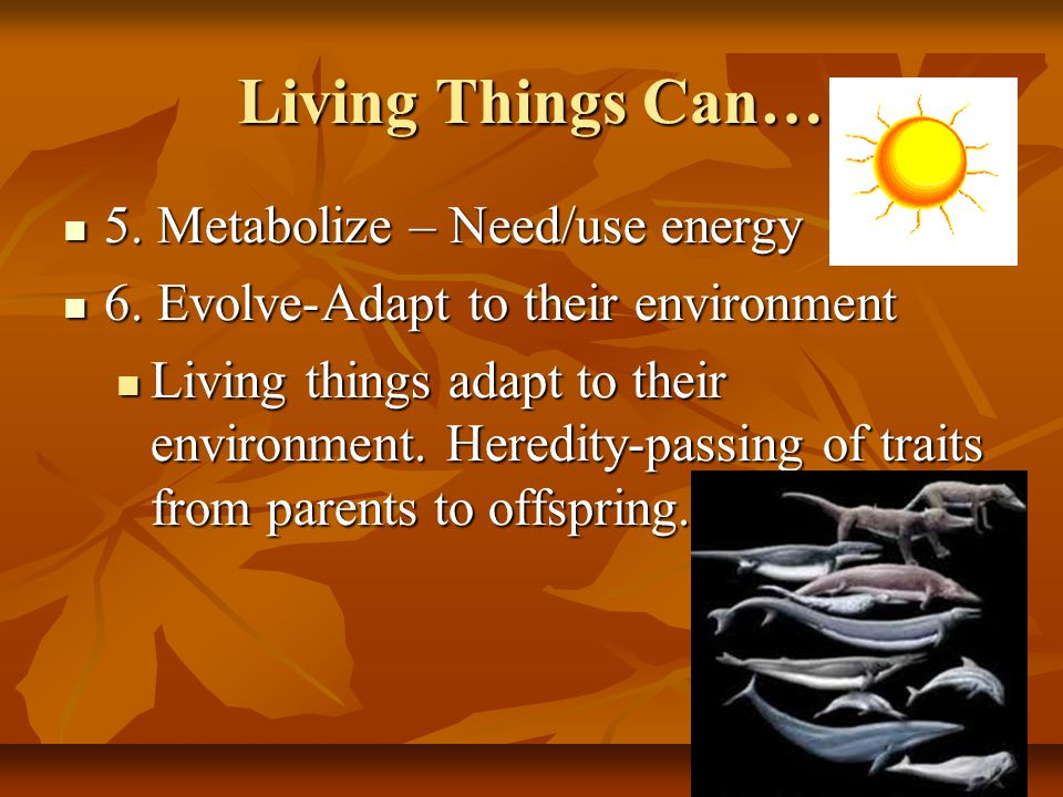 Living Things Can… 5. Metabolize – Need/use energy 5.