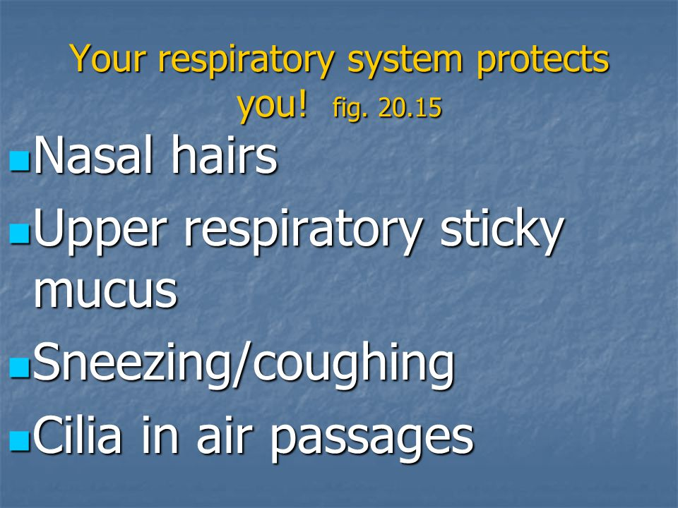 Your respiratory system protects you. fig.