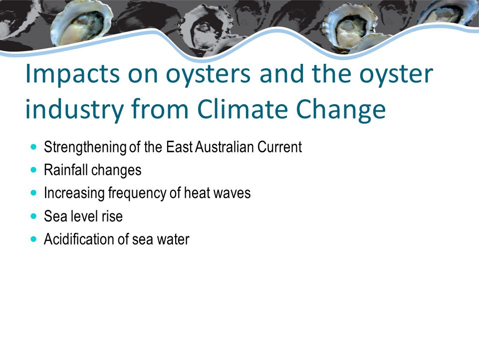 Impacts on oysters and the oyster industry from Climate Change Strengthening of the East Australian Current Rainfall changes Increasing frequency of heat waves Sea level rise Acidification of sea water