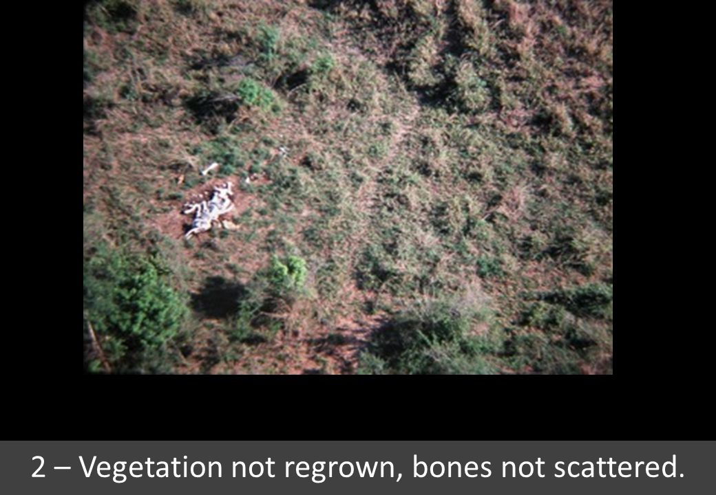 2 – Vegetation not regrown, bones not scattered.