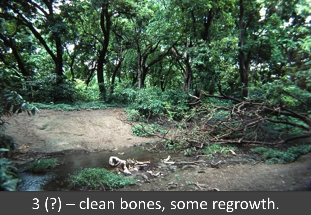 3 ( ) – clean bones, some regrowth.