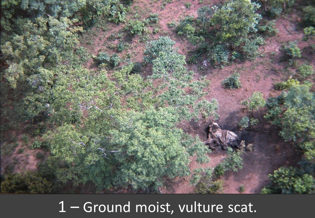 1 – Ground moist, vulture scat.