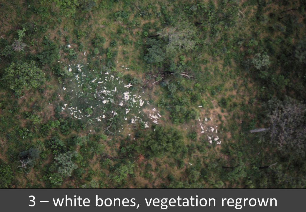 3 – white bones, vegetation regrown